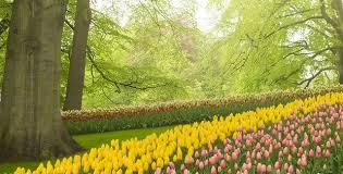 stunning layering bulb garden