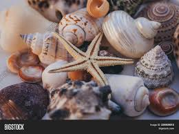 sea shells collection seashell background image photo free trial bigstock