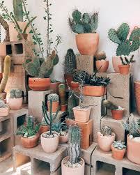 awesome indoor and outdoor cactus garden ideas no