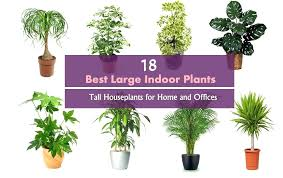 good indoor plants best balcony garden web for air