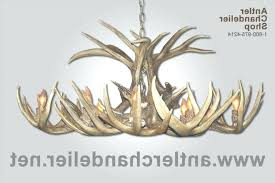white antler chandelier real antler white tail oblong chandelier 5 antler chandelier within real antler chandelier