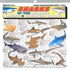 Fishermans Shark Identification Chart 1