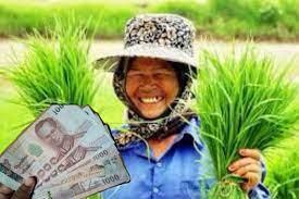 ข่าวดี! เกษตรกร 1 ล้านรายแรก ได้รับเงินเยียวยา 15 พ.ค.นี้แน่นอน สยามรัฐ