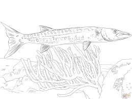 Small Picture Great Barracuda coloring page Free Printable Coloring Pages