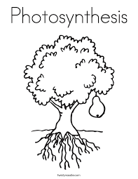 Photosynthesis Coloring Worksheet Worksheets for all | Download ...