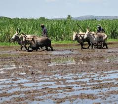 Image result for tamilnadu agriculture photos