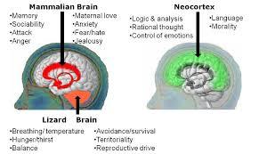 Image result for สมองคนเราไม่เท่ากัน