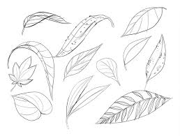 i m honestly not sure if it s leaves or leafs oh well the first thing you re going to do is draw a page of them the first thing i always remend when
