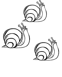 Small Picture Snail Coloring Pages Coloringpages1001com