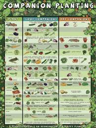 Small Picture Vegetable Garden Design Ideas Tips and Planting The WHOot
