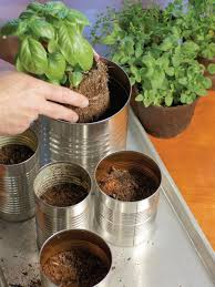 unbelievable grow your own kitchen countertop herb garden picture for growing in pots concept and style