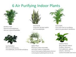 household plants house plants that are not poisonous