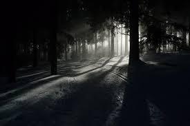 Resultado de imagen para imagenes de el bosque la selva negra