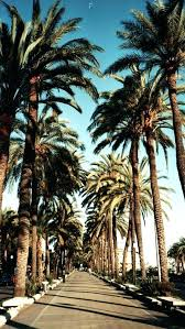 Palm Trees Wallpaper Best Palm Background Ideas Wallpaper California