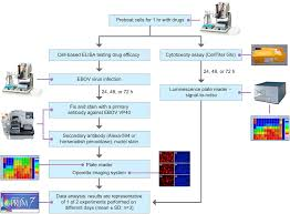 Drug Testing Flow Chart Flow Chart Of The Steps Of The Ebov Drug Screen Assay