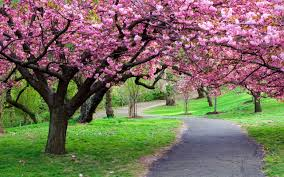 spring nature backgrounds. Beautiful Nature Wallpapers Mobile Spring Backgrounds A