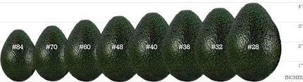 Fruit Specifications Del Rey Avocado