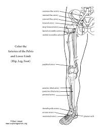 Small Picture 80 best Human Anatomy images on Pinterest Human anatomy Kid