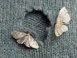 What Did Moths Do Before Lights How To Get Rid Of Moths In The House Best Way To Kill