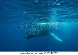 So when dory and marlin went down the whale's throat, in real life, they'd have simply been eaten. Shutterstock Puzzlepix