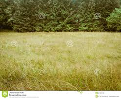 simple nature background. Contemporary Background Download Green Toned Forrest And Meadow Simple Nature Background Stock  Photo  Image Of Nature L