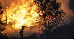 Detido bombeiro suspeito de atear fogo em Alfândega da Fé