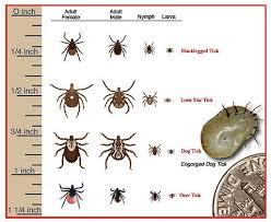 Tick Identification Chart Tick Species Identification Chart 1 Countryside Landscape