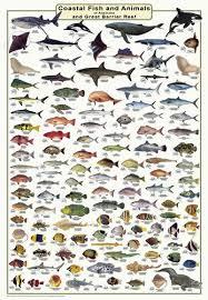 Fish Identification Wall Charts Camtas Marine Maps
