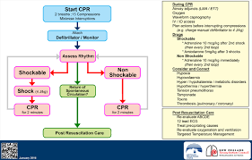 Resuscitation Chart Pdf Clinical Practice Guidelines Resuscitation