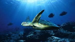 Marine Biologist Job Descriptions Working Conditions Marine ...