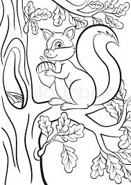 Coloring Page Little Cute Squirrel Stock Vector Colourbox