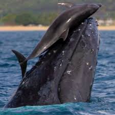 best marine life education images environment  dolphins and whales playing we have so much to learn from about so very