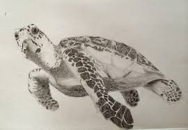 Small Picture Drawn turtle pencil drawing Pencil and in color drawn turtle