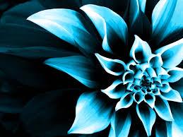 Color Changing Wallpaper Flower Wallpaper Color Change Kamishadjones