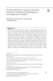 development strategies essay software