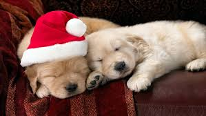 christmas puppy iphone wallpaper. Perfect Iphone Christmas Puppy Download Dog HD Wallpapers For IPhone 1136x640 On Iphone Wallpaper U