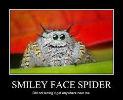 spider5.jpg via Relatably.com