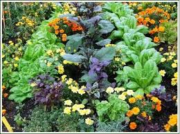 Vegetable Companion Planting Charts The Benefits Of Companion Plants For Your Garden