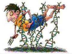 GMO health hazards ile ilgili görsel sonucu