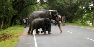 Man Animal Conflict In Tamil Nadu Gets No Attention From Any.