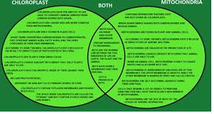 Venn Diagram Of Mitochondria And Chloroplasts Complete The Venn Diagram To Compare And Contrast