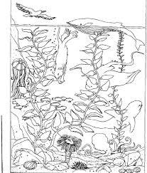 La Nature En Coloriage Mer Page 2