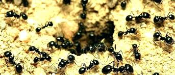 ants in yard best ant for yard ant spray for yard best ant for