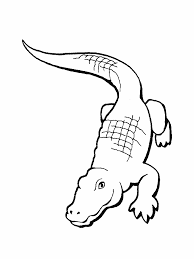 Dessin De Coloriage Alligator Imprimer Cp00730