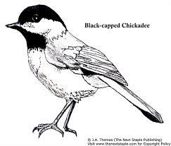 Chickadee Colouring Page