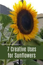 sunflowers 7 creative uses for sunflowers