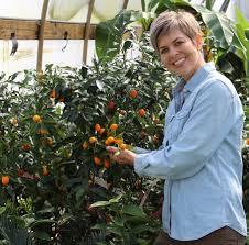 MEIWA KUMQUAT TREE  Just Fruits And ExoticsKumquat Tree Not Bearing Fruit