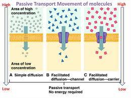 3 Types Of Passive Transport 3 Types Of Passive Transport Koran Opencertificates Co