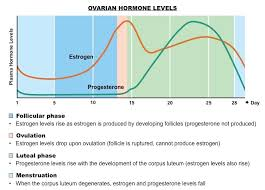 Typical Menstrual Cycle Chart Menstrual Cycle Bioninja