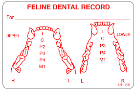 Pfizer Dental Chart 69 Interpretive Feline Dental